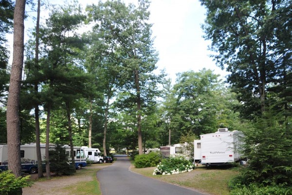 Campsites in the pines section of our park, many rvs on each side of the paved road with trees and flower bushes. There are also very tall pine trees.