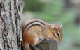 Be on the lookout for chipmunks – you can find them everywhere
