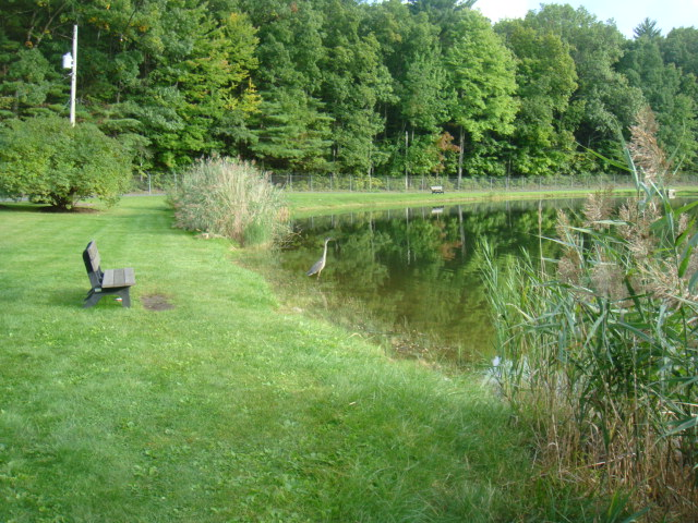 Guest submitted photo – bass fishing pond