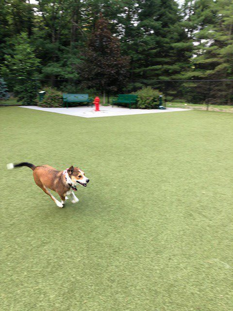 Puppy Playtime at Charlie's Bark Park