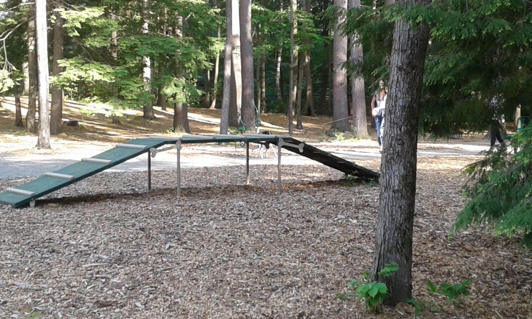 Dog park feature