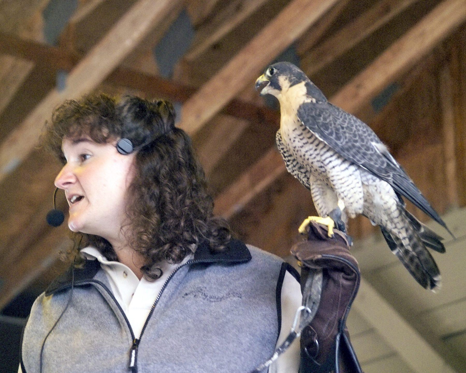 Beth Bidwell of Wild Things brings along birds of prey & reptiles