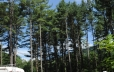 Can't beat a bike ride through the tall Adirondack pine trees (300's)