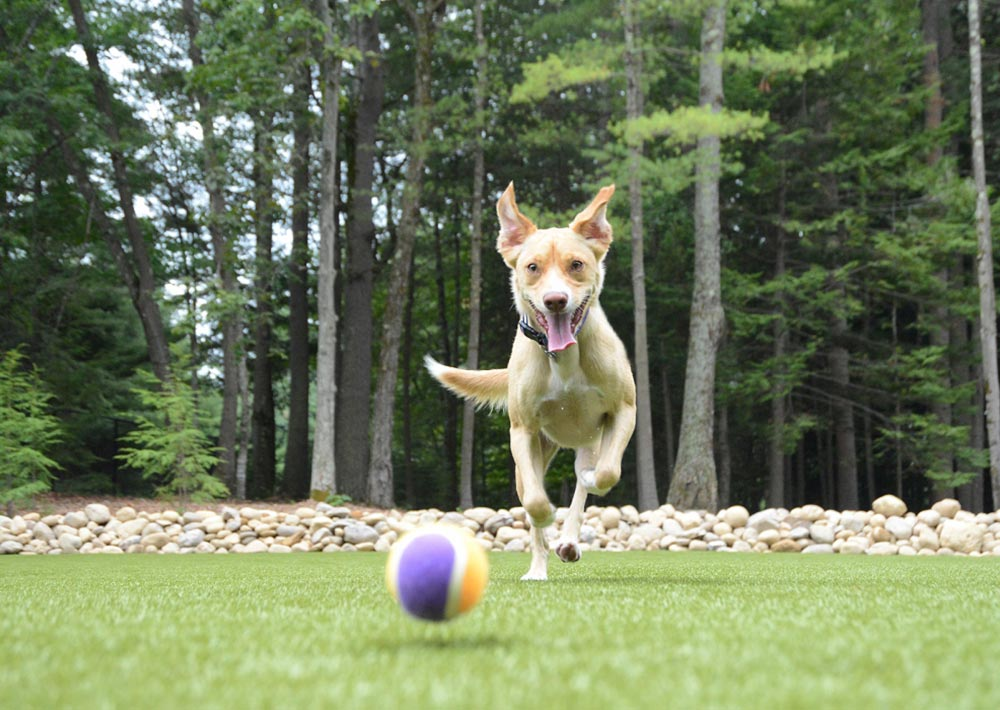 Dog fetching ball at Charlie's Bark Park