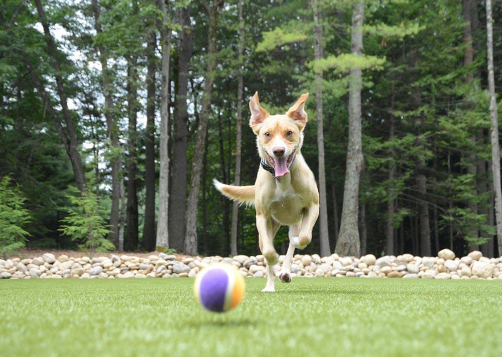 Dog fetching ball at Charlie's Bark Park