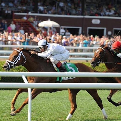 Horses racing at the Saratoga Springs Race Course